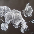 Orchids by Iftikhar Ahmed