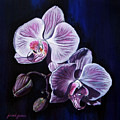 Orchids II by Joan Garcia