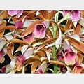 Orchids In Bloom by Mindy Newman