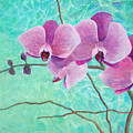 Orchids In Pink by Arlissa Vaughn
