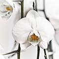 Orchids by John Ater