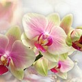 Orchids by Morag Bates