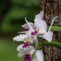 Orchids On A Tree by Teresa Wilson