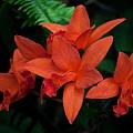 Orchids by Robert Sander