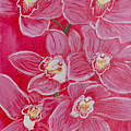Orchids by Samanvitha Rao