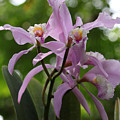 Orchids by Thomas Pipia
