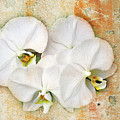 Orchids Upon The Rough by Andee Design