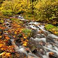 Oregon Autumn Beauty by Mike  Dawson