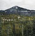 Oregon Cascade Range Forest by Kyle Hanson