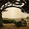 Oregon Coastline With Tree by Michelle Calkins