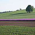 Oregon Flower Farm by Liz Santie