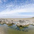 Oregon Tide Pool by Margaret Pitcher