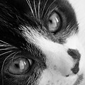 Oreo In Black And White by Sarah Barba