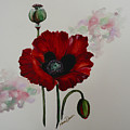 Oriental Poppy by Karin  Dawn Kelshall- Best