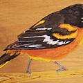 Oriole 3 by Paul Bashore
