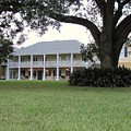Ormond Plantation by Michelle Powell