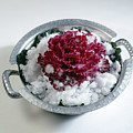 Ornamental Cabbage by Stefania Levi