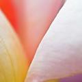Ornamental Rose Flower Details by Heiko Koehrer-Wagner