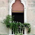 Ornate Window With Red Shutters by Donna Corless