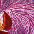 Orquidea Rosa by Karla Kernz