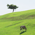 Oryx On Hill by Jim And Emily Bush