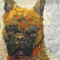 Oscar The Boxer by Karla Kriss