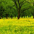 Osceola Landscape by Tammy Chesney