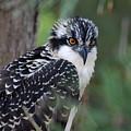 Osprey 31 by Joyce StJames