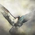 Osprey by Daniel Eskridge