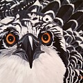 Osprey Eyes  by Debbie LaFrance