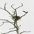 Osprey Nest by MotionOne Studios