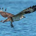 Osprey Ready For Fish by KenDidIt Photography