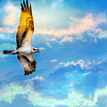 Osprey Soaring High Against A Beautiful Sky by Patrick Wolf