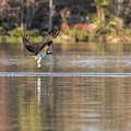 Osprey Strike Out by Jemmy Archer