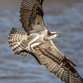 Osprey Take-out by Jeff Carlson