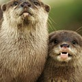 Otter And Cub by Franco De Luca Calce Wildlife Photographer