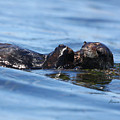 Otter Bliss by Alison Salome