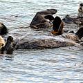 Otter Family by AJ Schibig