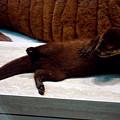 Otter Like It by LeeAnn McLaneGoetz McLaneGoetzStudioLLCcom