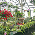 Ott's Greenhouse  Schwenksville Pennsylvania Usa by Mother Nature