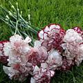 Forgotten Bouquet  by Shannon Turek
