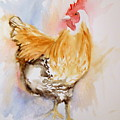 Our Buff Rooster  by Anna Jacke