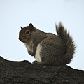 Our Squirrel Chubby by Teresa Mucha