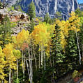 Ouray Aspens by Ray Mathis