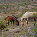 Out In The Open Range by Darryl Treon