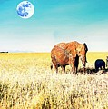 Out In The Serengeti by Celestial Images