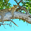 Out On A Limb by Don Mercer