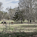 Out To Pasture by Darrell Clakley
