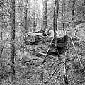 Outcrop, Woods, Dipton Burn by Iain Duncan