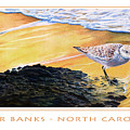 Outer Banks Sanderling by Bob Nolin
